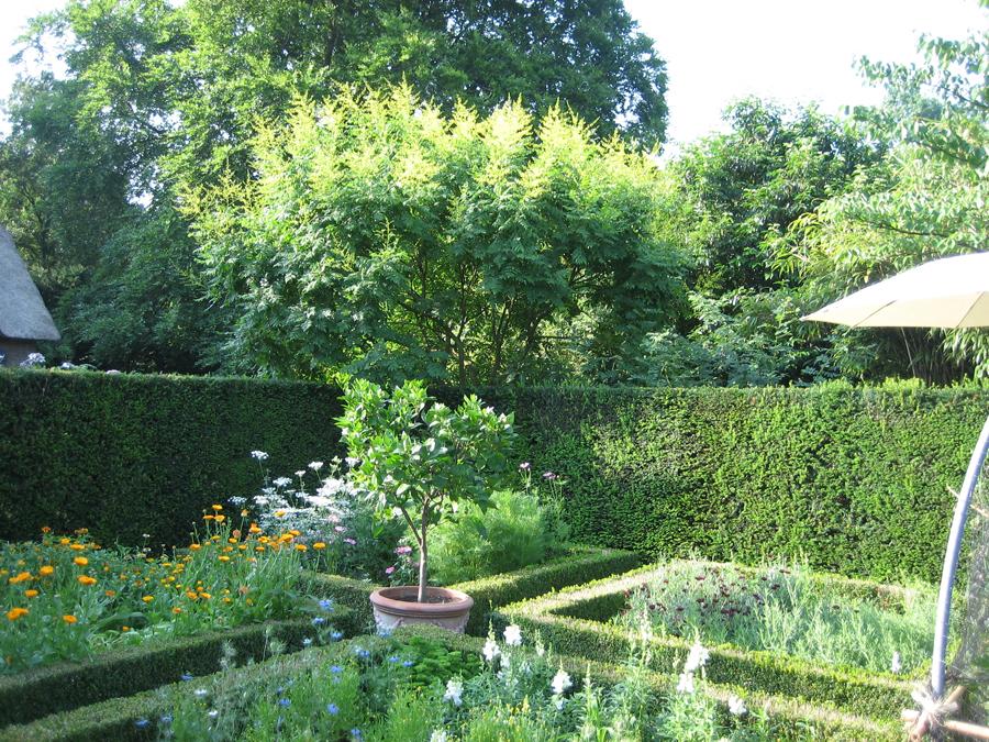 8-kruiden-bloemenhoek-wijngaard-tuin-laren
