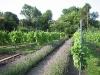 9-kruiden-bloemenhoek-wijngaard-tuin-laren